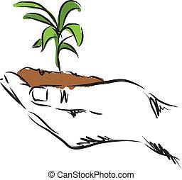 planta, mão, ilustração, penduradas