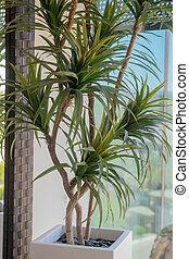 planta, potenciômetro cerâmico, indoor, modernos, tropicais, elegante, branca