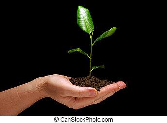 planta, solo