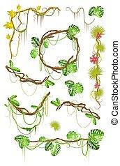 planta tropical, liana, decorativo, illustration., creeper, apartamento, vetorial, jogo, elementos, isolado