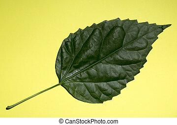 planta verde, folha, fundo, amarela