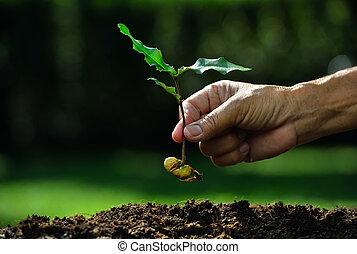 plantar, planta, solo, jovem, mão, semente, agricultor