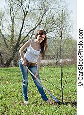 plantar, primavera, árvore, jardineiro