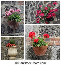 plantas, colagem, casa, -, exterior, closeup, florescendo