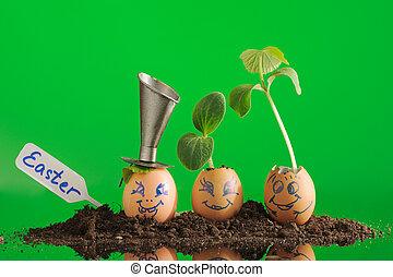 plantas, gardening., orgânica, seedling, cascas ovo, três, eco, horizontal.