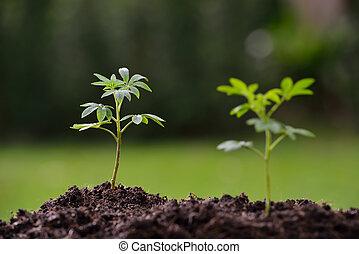 plantas, luz, jovem, manhã