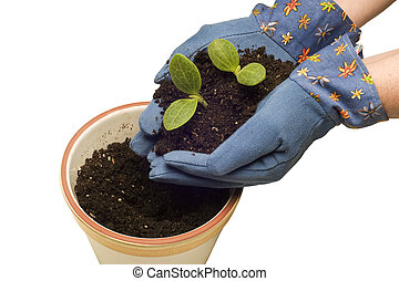 plantas, plantar, jovem