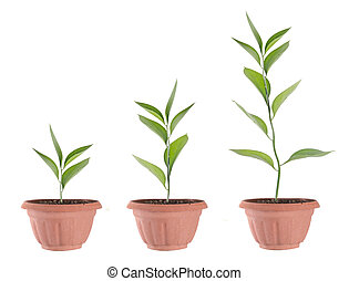 plantas, solo, três