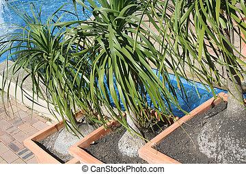 plantas, três