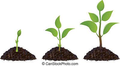 plantas, verde, jovem
