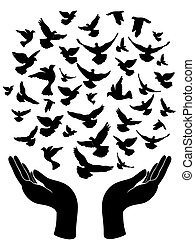 pombo, paz, mãos, soltar