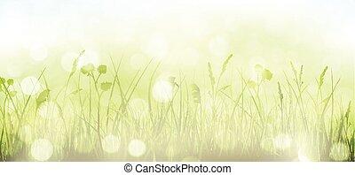 pontos, primavera, céu, capim, bokeh, experiência verde, luz, blurry