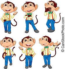 posições, diferente, macaco