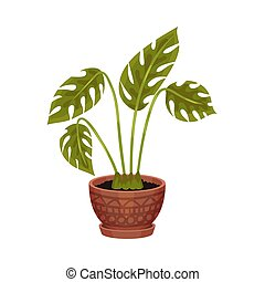 pot., houseplant, ilustração, experiência., vetorial, branca