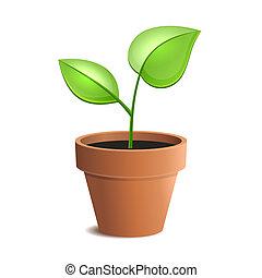 potenciômetro planta, jovem, isolado, vetorial, verde, backgrounds., branca