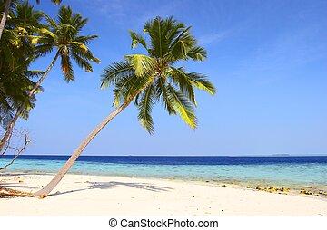 praia, coqueiros, agradável