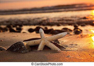 praia, pôr do sol, starfish