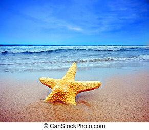 praia, starfish