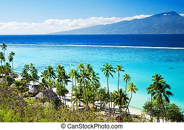 praia tropical, coqueiros, tahiti