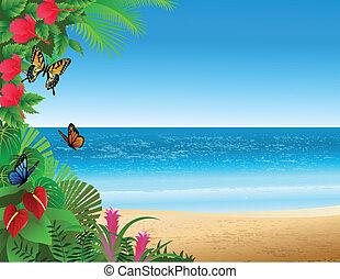 praia tropical, fundo