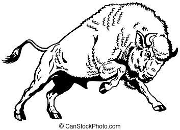 pretas, europeu, bisonte, branca