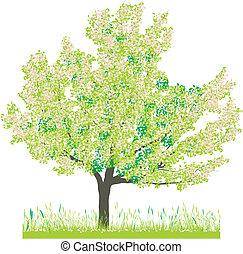 primavera, árvore, cereja
