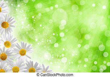 primavera, abstratos, fundos, bokeh, blured, margarida, flores