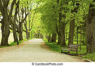 primavera, banco parque