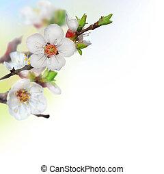 primavera, flores, cereja