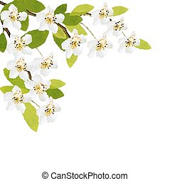 primavera, flowers., fundo branco, vector.