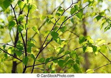 primavera, folhas, verde