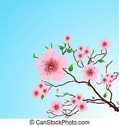 primavera, fundo, floral