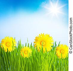 primavera, gramado, dandelions