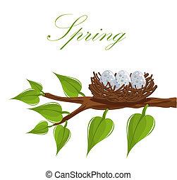 primavera, ninho