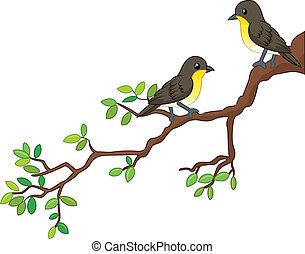 primavera, pássaros, dois, ramo, canção