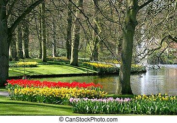 primavera, parque, tempo