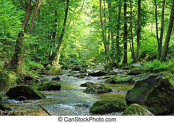 primavera, rio, floresta, tcheco