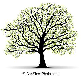 proteção ambiente, árvore verde