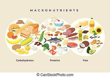proteínas, fazer dieta, -, elements., macro, macronutrients., ilustração, concept., vetorial, apartamento, alimentos, comer, desenho, saudável, comparação, ícones, alimento, carboidratos, isolated., gorduras, principal, infographic, grupos