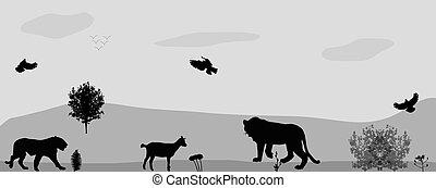 prowl., selvagem, vetorial, animais, illustration.