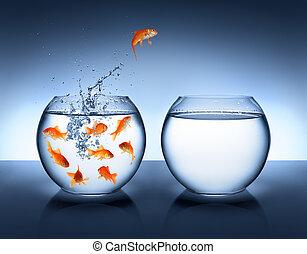 pular, melhoria, -, goldfish
