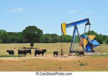 pumper, cattle., óleo