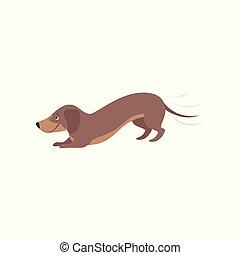 purebred, cachorro marrom, ilustração, brincalhão, vetorial, fundo, branca, bassê