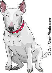 raça, cão, sittong, vetorial, terrier macho, caricatura