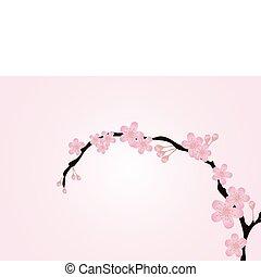 ramo, cor-de-rosa, isolado