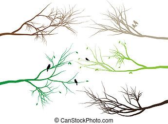 ramos, árvore