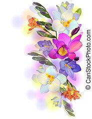 ramos, freesia, suave, vetorial, fundo, flores