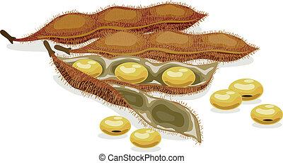 realístico, vetorial, soybean., illustration.