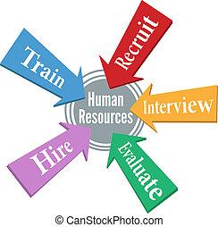 recursos, pessoas, empregado, human, empregar