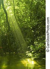 reflexão água, floresta, verde